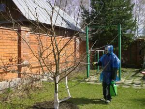 Уход за яблоней весной – обрабатываем от вредителей