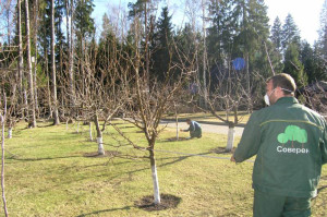 Уход за яблоней весной – обрабатываем от вредителей фото