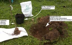 Как ухаживать за яблоней весной с помощью удобрений?