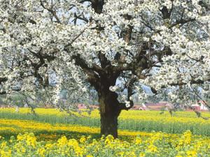 Как ухаживать за яблоней весной с помощью удобрений? фото