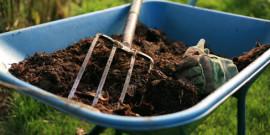 Видео: Летняя подкормка растений, кому подкинуть навозика?