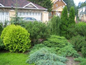 На фото - туи в саду, ladyspecial.ru