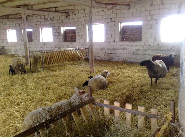 Сарай для овец своими руками
