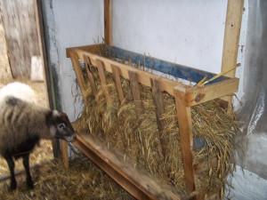 На фото - кормушка для овец в сарае, olgaview.blogspot.com