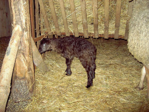 Фото сена для овец, zootehnikoff.ru