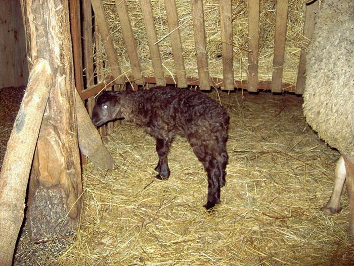 Сарай для коз своими руками фото фото 809