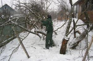 На фото - обрезка яблонь зимой, soweren.ru