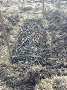 Фото веток на компост, rodovid.me