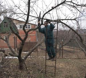 Фото весенней обрезки, vinograd-is.ru