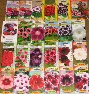 Весенняя посадка цветов: какие семена покупать?