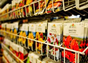 Весенняя посадка цветов: какие семена покупать? фото