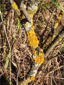 На фото - болезни плодовых деревьев, dv0r.ru