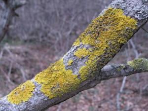 На фото - лишайники на плодовых деревьях, liveinternet.ru