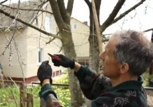 Фото обрезки деревьев, i-remo.ru