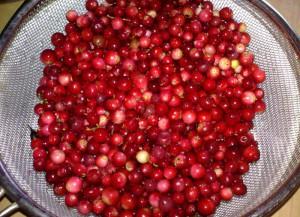Фото сбора ягод брусники, findfood.ru