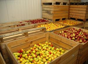 Создаем нужные для хранения яблок условия