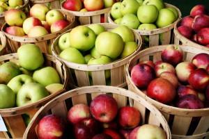 Хранение яблок зимой: советы специалистов