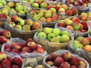 Хранение яблок зимой: советы специалистов фото