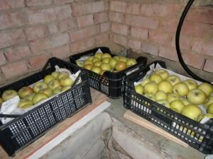 Какие методы хранения плодов существуют?
