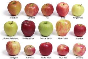 Какие методы хранения плодов существуют? фото