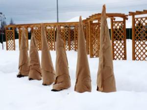 Фото укрывания хвойных деревьев на зиму, uzhniy.ru