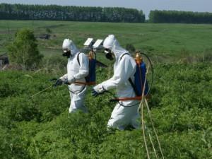 Фото внесения химических веществ, frutisad.ru
