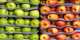Хранение яблок зимой – чтобы урожай был в целости и сохранности!