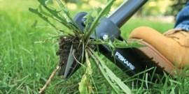 Методы борьбы с сорняками – выбираем наиболее эффективный