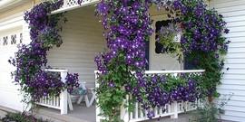 Вьющиеся растения для беседки – 5-ка лучших