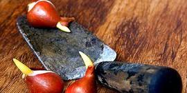 Посадка луковичных растений: как провести все работы осенью?