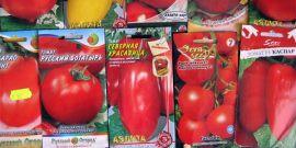 Семена помидоров для теплиц – что лучше выбрать?