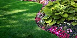 Партерный газон – как сделать лужайку класса «люкс»?