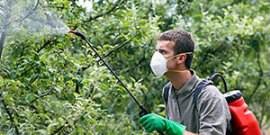 Весенняя обработка сада – какие средства использовать?