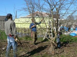 На фото - обрезка садовых деревьев, botanichka.ru