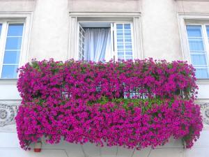 Фото про оформление лоджий цветами, spinagerfit.ucoz.ru