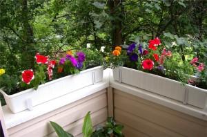 Фото про грамотное оформление балкона цветами, sfw.so