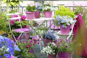 Фото про то, как оформлять балкон цветами, marimeri.ru