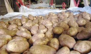 Фото про правильное хранение картофеля,votevk.ru