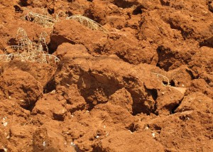 На фото - глинистая почва, rusentu.livejournal.com