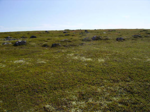 На фото - тундровая почва, turizm.lib.ru