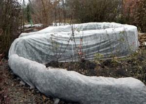 На фото - укрытие плетистой розы на зиму, wild-mistress.ru