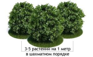 Фото живой изгороди в шахматном порядке, erdedank.ru