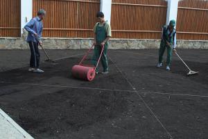 Как правильно посадить газон своими руками на даче?