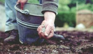 Как правильно посадить газон своими руками на даче? фото
