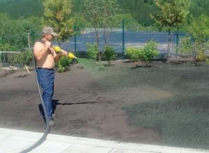 Посадка газона своими руками: инструкция фото