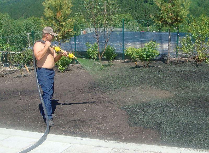Как посадить газонную траву на даче своими руками 99