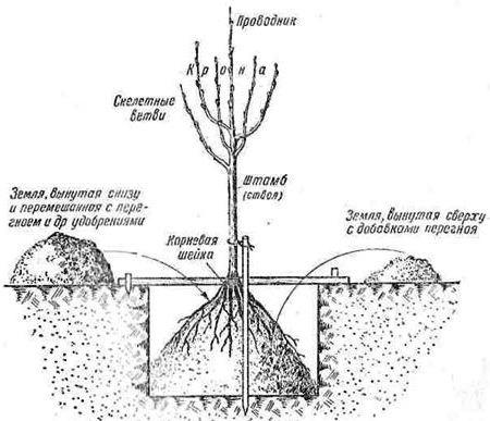 как выбрать место для посадки яблонь
