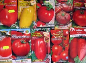На фото - различные семена помидоров, swoman.com.ua