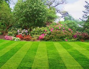 На фото - рулонный газон, lawnservicetampa.us