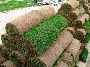 Фото рулонов газонной травы, eurogreen-ua.com.ua